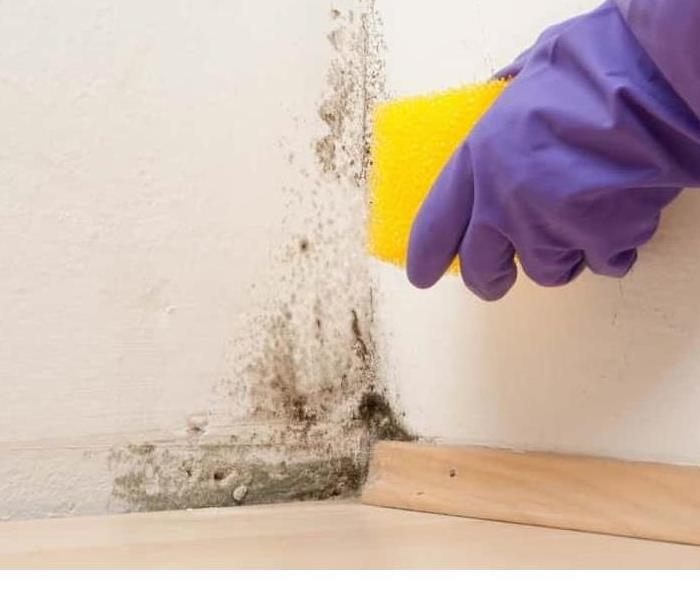 Mold Remediation Is Black Mold Really Dangerous?